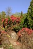 W jesieni, koloru żółtego i czerwieni liście obrazy royalty free