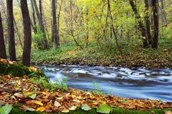 w jesieni rzeki drzew Zdjęcia Royalty Free