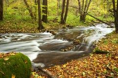 w jesieni rzeki drzew Obraz Stock