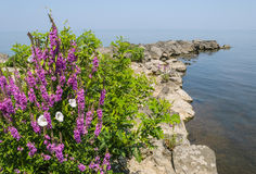 W Jeziorze skalisty Molo Zdjęcie Stock