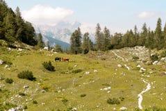 W Juliańskich alps TARGET665_0_ ścieżka Obraz Royalty Free