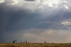 w Kenya sawanna Zdjęcia Stock