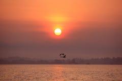 w kierunku latający słońce Zdjęcie Royalty Free