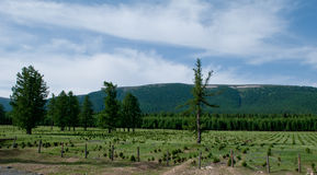 w kierunku nyingchi sceneria Tibet Zdjęcia Royalty Free