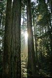 W Kolumbia Brytyjska piękny tropikalny las deszczowy, Kanada fotografia royalty free