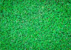 w kontekście niebieskie chmury odpowiadają trawy zielone niebo białe wispy natury zdjęcie stock