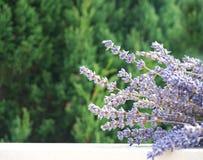 w kontekście niebieskie chmury odpowiadają trawy zielone niebo białe wispy natury Wiązka lawenda w tle przedpole drzewna korona,  obrazy royalty free