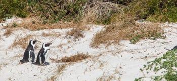 W krzakach na piasku. Zdjęcie Royalty Free