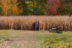 W kukurydzę Fotografia Stock