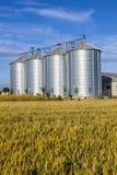 W kukurydzanym polu cztery srebnego silosu Obraz Royalty Free