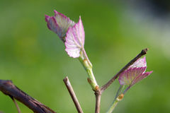 W kwiacie Obrazy Royalty Free