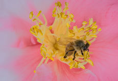 Być w kwiacie Zdjęcia Stock