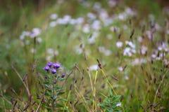 W kwiacie Fotografia Royalty Free