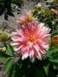W kwiacie Zdjęcia Stock