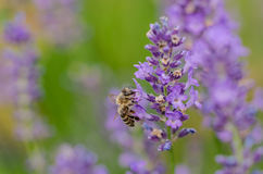 Być w kwiacie fotografia stock
