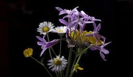 W kwiatach Zdjęcia Royalty Free