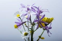 W kwiatach Obrazy Royalty Free