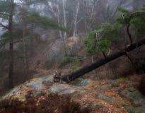 W las Zdjęcie Royalty Free