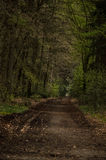 W las Zdjęcie Stock