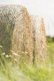 W lato krajobrazie kiszonek bele zdjęcia stock