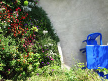 W lato luksusowego ogródu pogodnej kwitnącej jaskrawej fotografii Fotografia Stock