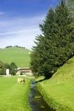 W lato Szwajcara paśnik zdjęcie royalty free