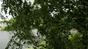 W lecie dzień wiatr dmucha na drzewie zbiory wideo