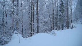 W lesie śnieżna droga zbiory wideo