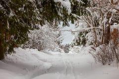 W lesie śnieżna droga obraz royalty free