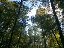 W lesie Obraz Stock