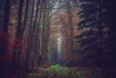 W lesie Zdjęcie Stock