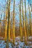 W lesie zdjęcia stock