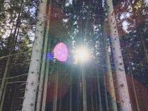 W lesie Zdjęcia Royalty Free
