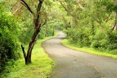 W lesie asfaltowa droga Zdjęcie Royalty Free