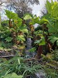 W lesie, Cornwall fotografia stock