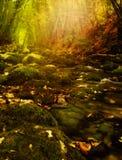 W lesie fantastyczna jesień. obraz royalty free