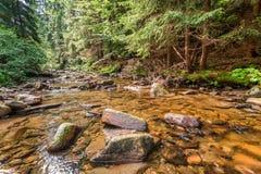 W lesie halny strumień Obraz Stock
