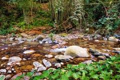 W lesie halny strumień Obrazy Stock
