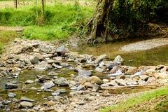 W lesie halny strumień Fotografia Royalty Free