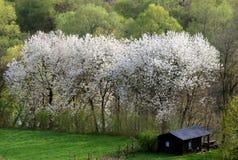 W lesie kwiatów drzewa Zdjęcie Royalty Free