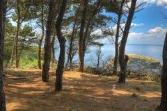 W lesie morzem wyspa belle Ile en Mer Fotografia Royalty Free