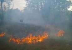 W lesie pożarniczy palenie obrazy stock