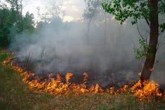 W lesie pożarniczy palenie obrazy royalty free