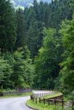 W lesie pusty sposób Obraz Stock