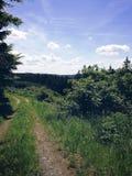 W lesie zdjęcie royalty free