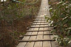 W lesie zawieszenie most obraz stock