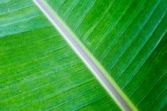 W Lesie zielony Liść Zdjęcie Stock