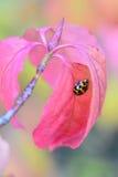 W liściach Fotografia Stock
