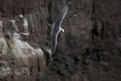 W locie denny ptak Obraz Stock