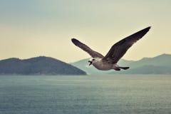 W locie TARGET426_0_ seagull Obraz Royalty Free